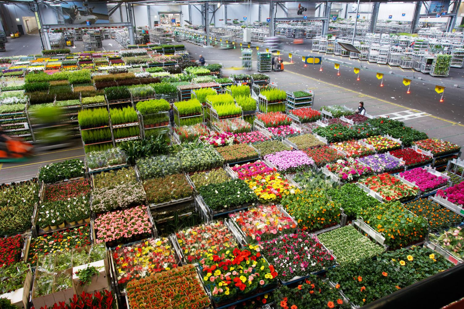 Dutch agricultural exports increased in 2015