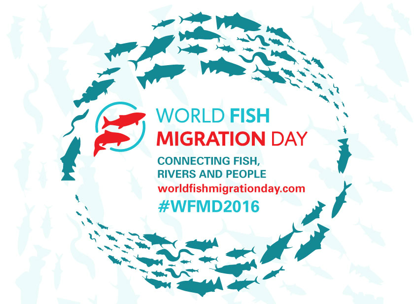 Celebrate World Fish Migration Day, May 21