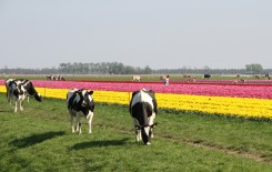 Dutch innovations on display at World Dairy Expo