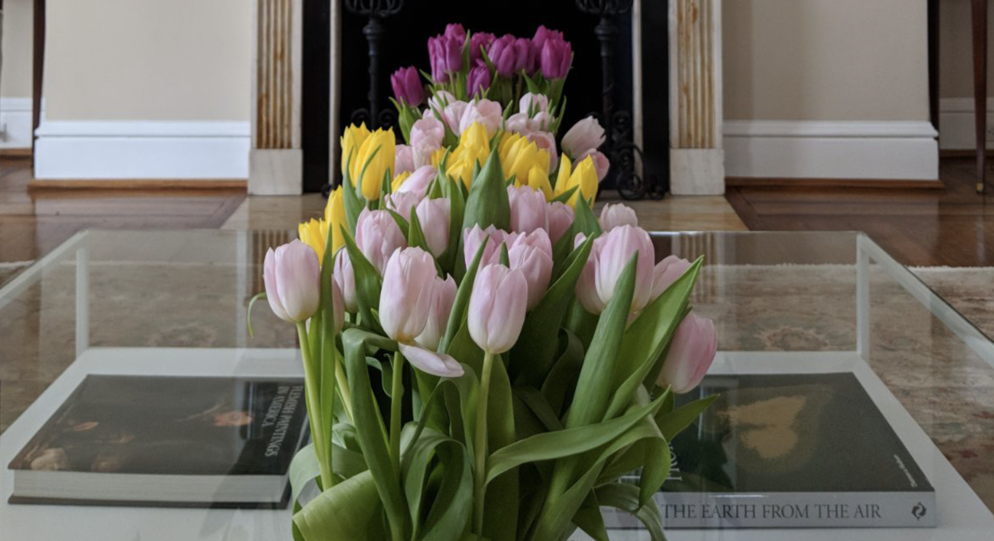15,000 flowers to brighten ambassador's residence for Tulip Days