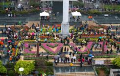 100,000 free tulips turn the heart of San Francisc ...