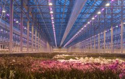 AppHarvest brings Dutch greenhouse expertise to Ke ...