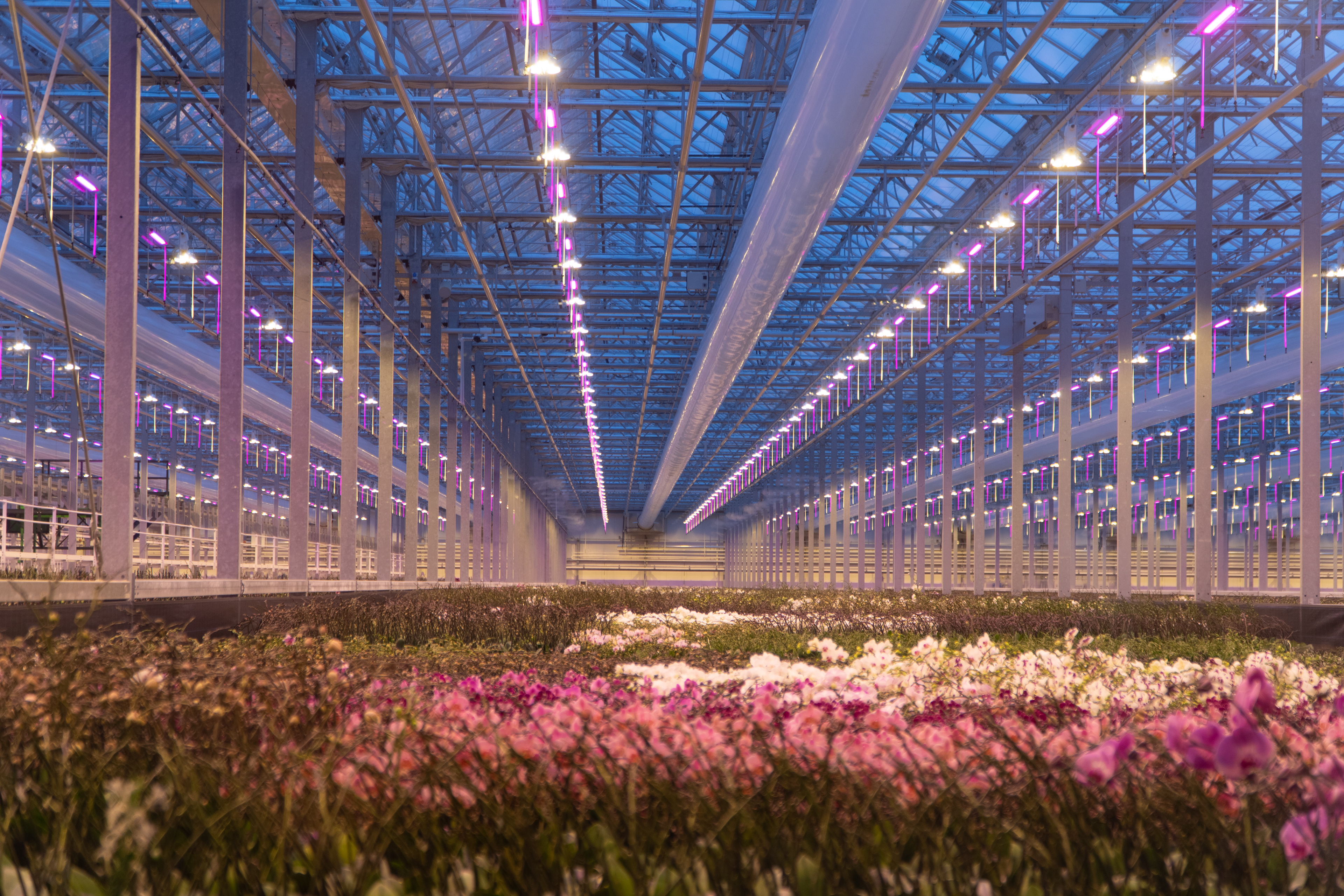 AppHarvest brings Dutch greenhouse expertise to Kentucky